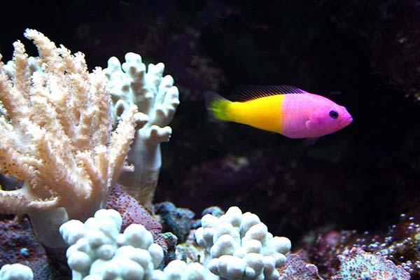 Vendita pesci tropicali a como centerzoo riempie il tuo for Pesci tropicali acqua dolce