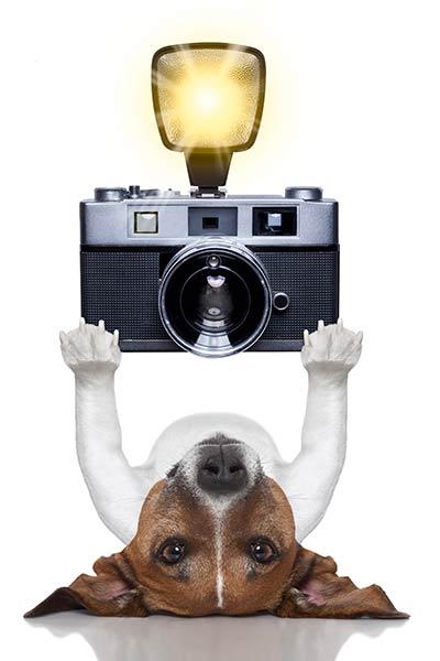centerzoo contest fotografico