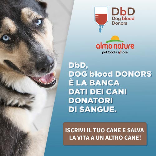 Dog-blood-donors