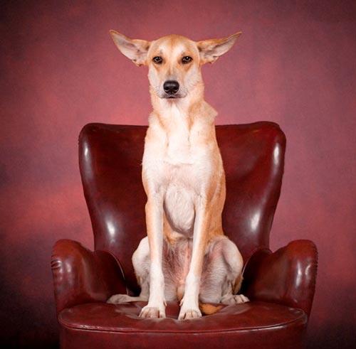 humandog2