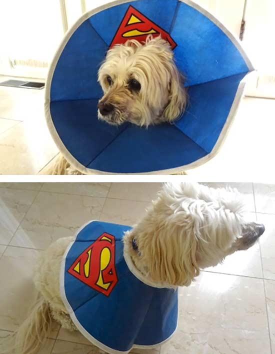 collare-elisabettiano-superman