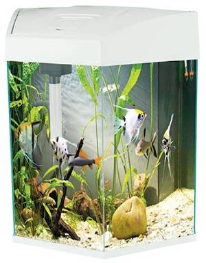 Acquari disponibili in negozio centerzoo lariano for Acquario bianco usato