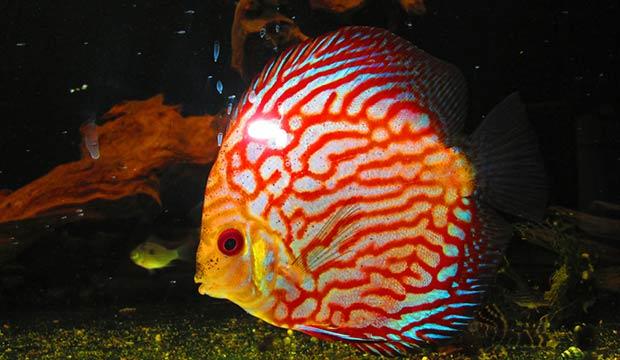 Vendita pesci tropicali a como centerzoo riempie il tuo for Piani domestici tropicali